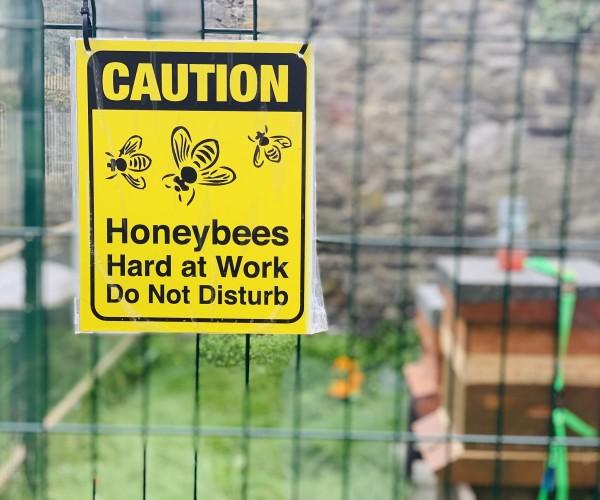 Beehive+2